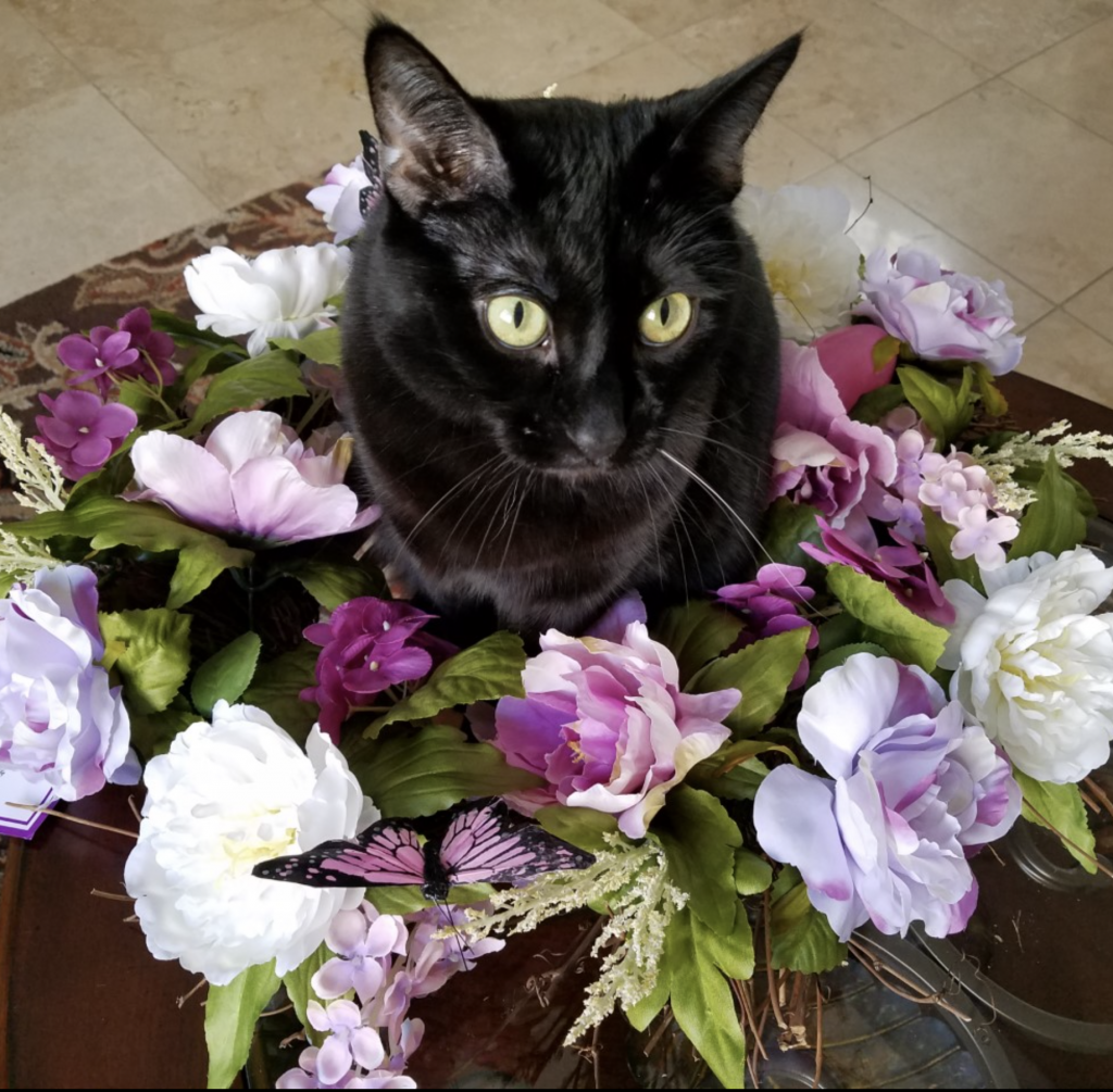 Mother's Day Cat, Make-over Wreath - FAMILY TIPS & QUIPS